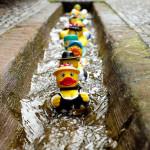canard sur canal